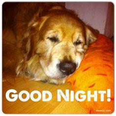 #Firmenhund Nemo hatte heute einen langen, mühsamen Arbeitstag und ist jetzt hundemüde! Gute Nacht euch allen :-) #instacollage #GoldenRetriever #GoodNight #dog #wwedu #hund #müde #schlaf Golden Retriever, Good Night, Education, World, Dogs, Instagram Posts, Animals, Business Day, Sleep