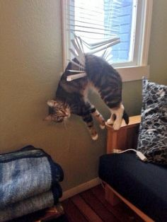 This cat who just really wanted to see the outside world: | 19 Cats Who Made Poor Life Choices