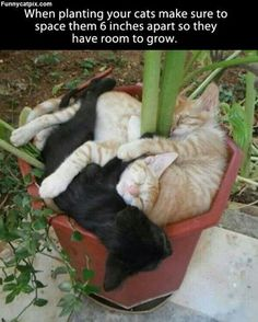 Cat napping! :)