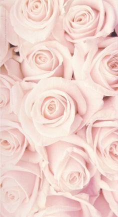 beauty Wallpaper roses - 45 Beautiful Roses Wallpaper Backgrounds For iPhone Best Flower Wallpaper, Vintage Flowers Wallpaper, Rose Gold Wallpaper, Beautiful Flowers Wallpapers, Pink Wallpaper Iphone, Iphone Background Wallpaper, Butterfly Wallpaper, Beautiful Pink Roses, Pretty Wallpapers