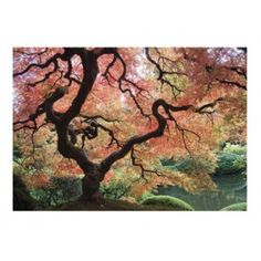 Fotomural de un jardín japonés