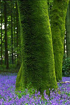 Beech Tree, Andy Small