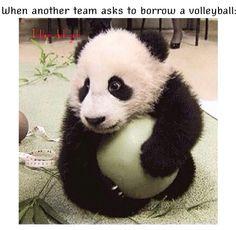 I am the panda. volleyball humor/ cute animal/ panda