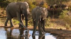 Umlani Star Game Lodge accommodation in Timbavati Nature Reserve Secure online payment! Kruger National Park, National Parks, South Africa Holidays, South Africa Wildlife, Tourism Marketing, Game Lodge, Group Tours, African Safari, Nature Reserve