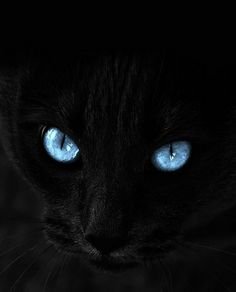 Wow ... talk about cat eyes!