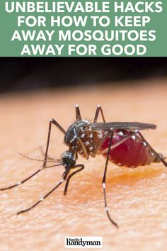 Mosquitoes certainly know how to ruin a pleasant summer evening. Avoid them this summer by using one of these unique (and effective) tips on how to keep mosquitoes away. Get Rid Of Flies, Keeping Mosquitos Away, Scary Facts, Natural Mosquito Repellant, Small Fountains, Fly Traps, Insect Repellent, Useful Life Hacks, Cleaning