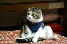 Cats For Adoption Cat Scottish Fold, Cat Hat, Smiles And Laughs, Cat Sitting, Drawing Reference, Cats And Kittens, Funny Cats, Adoption, Kitty