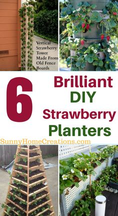 6 brilliant diy strawberry plants that you can add to your garden.