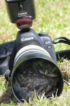 Camera shy!