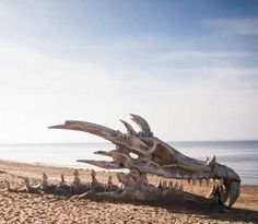 Huge dragon skull on a beach in England [7 pictures]