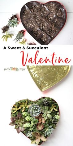This sweet and succulent valentine is just what Dr. Love ordered for the winter blues. How to make a heart-shaped cutting tray for succulent propagation. #gardentherapy #handmadegifts #succulents #valentinesday #diy Garden Projects, Garden Ideas, Propagating Succulents, Do It Yourself Projects, Propagation, Cacti, Homemade Gifts, Amazing Gardens, Thoughtful Gifts