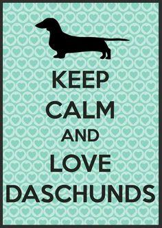 Love dachshunds