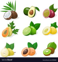 Vector File, Vector Art, Fruit Icons, Fruit Vector, Business Illustration, Fruit Illustration, Exotic Fruit, Watercolor Cards, Icon Design