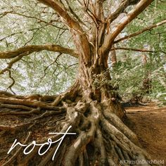 """God's people waited thousands of years for Jesus, the Messiah, """"the #root of Jesse"""" (heir to the throne of David), to come… ⠀ Yet this glorious King was despised and rejected, a Man of Sorrows, familiar with suffering. His earthly life was cut short; He had no descendants. (Isa 53) ⠀ Because of what He was willing to endure, today Jesus has many descendants, including you and me. We get to be part of the ultimate, most epic family tree! ⠀ #AdventWord #advent #root #tree ⠀ [photo: unsplash012]"""
