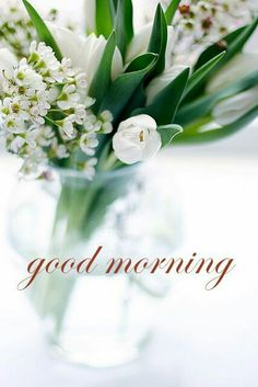 Looking for for inspiration for good morning sunshine?Check this out for very best good morning sunshine ideas. These hilarious quotes will you laugh. Good Morning Cards, Good Morning Sunshine, Good Morning Flowers, Good Morning Good Night, Good Morning Images, My Flower, White Flowers, Beautiful Flowers, White Tulips