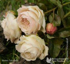 Английские розы из холодного фарфора. фото 1