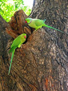 Kinds Of Birds, All Birds, Cute Birds, Pretty Birds, Little Birds, Beautiful Birds, Animals Beautiful, Exotic Birds, Colorful Birds