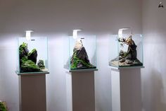 820 vind-ik-leuks, 16 reacties - Aquaman Nature Studio (@aquaman_nature_studio.pl) op Instagram: 'Aquaman Nature Studio 3 x shrimp set 29x29x35'