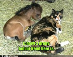 Funny Animal Captions - Friendship is Magic