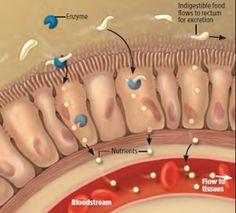 Dieta sem Glúten: Como o glúten provoca doença celíaca