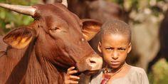 Hormis les récents massacres, on déplore une dizaine de morts causés par le choléra au nord-est du pays.