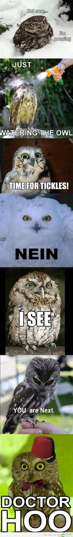 funny owls. Omg the doctor hoo one!!