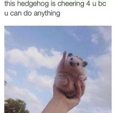 """Wholesome Memes And Posts That Will Restore Your Faith In Humanity - Funny memes that """"GET IT"""" and want you to too. Get the latest funniest memes and keep up what is going on in the meme-o-sphere. Animals And Pets, Baby Animals, Funny Animals, Cute Animals, Funny Horses, Rick E, Cute Hedgehog, Hedgehog Meme, Hedgehog Facts"""