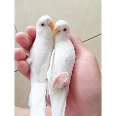 Follow kevinsbirds on Instagram