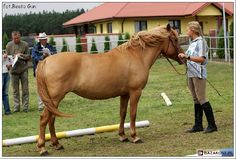 Horse Bridle, Country Of Origin, Trekking, Gypsy, Horses, Model, Animals, Animales, Animaux