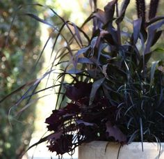 Purple millet, black mondo grass &sweet potato vine:  October Halloween Planter with Black Plants and Grasses, Gardenista