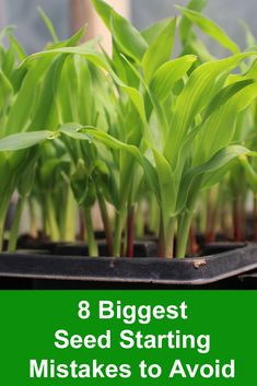 8 biggest Seed Starting Mistakes to Avoid and how to solve them, Over or under-watering, enough light, and not addressing a variety-specific needs will result in poor germination. Greenhouse Plants, Greenhouse Growing, Greenhouse Ideas, Gardening For Beginners, Gardening Tips, Garden Soil, Vegetable Garden, Easy Vegetables To Grow, Seed Packaging