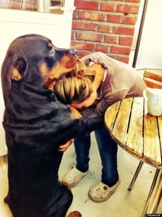 4) Shoulder To Cry On  -  When there is no one else, look at what man's best friend will do....