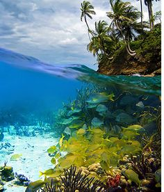 Nothing beats Scuba Diving in the Caribbean