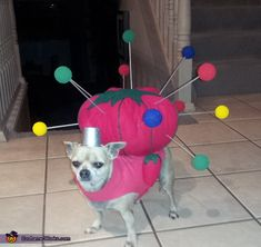 Peanut the Pin Cushion - Halloween Costume Contest 2012 Total knock off of Holly's 2011 costume for Macaroon. Diy Dog Costumes, Halloween Costume Contest, Animal Costumes, Halloween Fun, Chihuahua Halloween Costumes, Costume Ideas, Homemade Halloween, Cute Funny Animals, Funny Animal Pictures