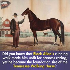 Did you know that Black Allan's running walk made him unfit for harness racing, yet he became the foundation sire of the Tennessee Walking Horse? https://youtu.be/SCbz22p01Q0 #dyksocial‬ ‪#didyouknow #BlackAllan #Black #unfit #harness #racing #foundation #Tennessee #Horse