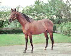 Lil E. Tee. 1992 Kentucky Derby winner. Jockey: Pat Day. Winning time: 2:03:00