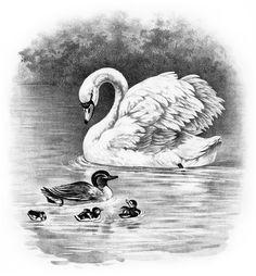 OldDesignShop_SwanDuckDucklingsBW.jpg (2550×2754)