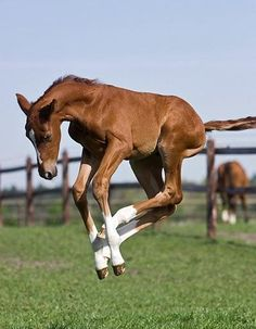 "springtime - time for showing off the ""springs"" in those long legs!!"