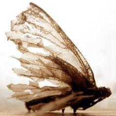 tattered moth wingswings - Google Search