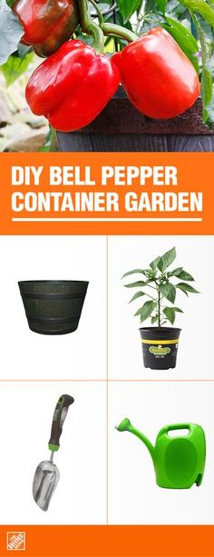 As pretty to grow as they are tasty to eat, peppers are an easy edible for the beginner gardener. Choose your favorite variety or grow a rainbow of red, orange, yellow, green and purple bells. Get all the supplies you need at The Home Depot. Indoor Vegetable Gardening, Home Vegetable Garden, Container Gardening Vegetables, Organic Gardening, Urban Gardening, Organic Farming, Growing Veggies, Growing Herbs, Growing Tomatoes