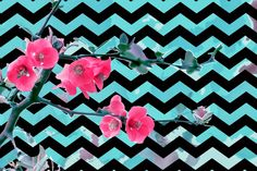 Cherry Blossom Chevron Background Freebies!
