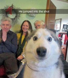 dog photobomb ~ funny snapchat humor