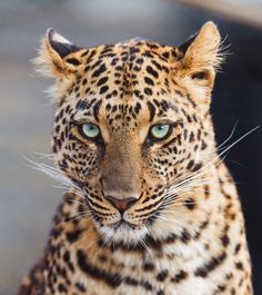 "6,079 Likes, 36 Comments - Wildlife Planet (@wildlifeplanet) on Instagram: ""Photo by ©Tambako the Jaguar #WildlifePlanet"""