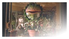 Little Shop of Horrors | 1986 | Tales of Terror | A nerdy florist develops a relationship with a talking plant that quickly grows when it is...