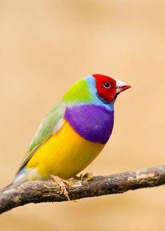 beautiful-birds-15.jpg 429×599 pixels