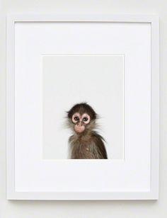 """Baby Monkey"" Little Darling Photograph by Sharon Montrose. Animal Print Shop, Live Animals, Artists Like, Fine Art Prints, Zig Zag, Monkey, Photograph, Image, Shopping"