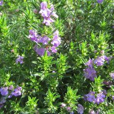Balkon-blumen - Retter Für Bienen, Hummeln Und Schmetterlinge In ... Blumen Schmetterlinge Im Garten
