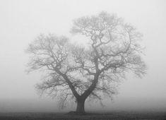 """9 """"Lone Tree"""" by Nick Allen https://gurushots.com/Modeller/photos?tc=2f714573798c4445d3810149174a9e47"""
