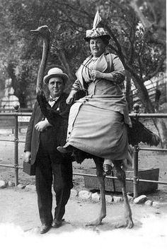 🔸offbeat Edwardian picture of lady seated on Ostrich with hubby blackandwhitephotography monochrome victorianchap edwardian oldphoto vintage goodolddays offbeat retro nostalgia victorian portrait victorian emu wtf Victorian Photos, Antique Photos, Vintage Pictures, Vintage Photographs, Old Pictures, Vintage Images, Old Photos, History Posters, Art History