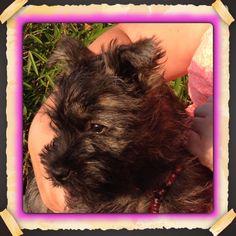 Kareltje puppy 3 months